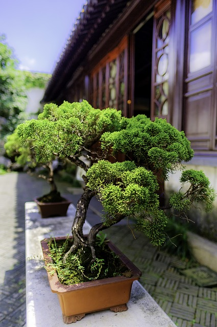 Ziemia do bonsai