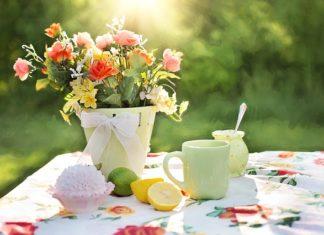Sasanka, czyli wczesna wiosna w ogrodzie