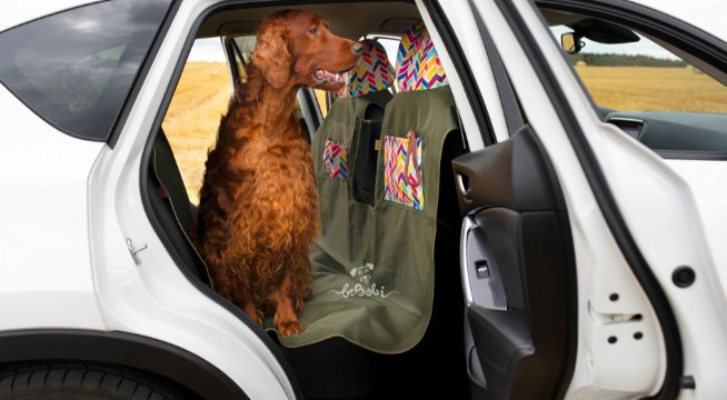 Akcesoria dla psów w podróży